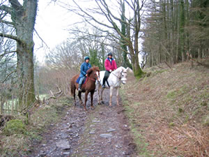 Two horses, with riders, standing on the Tramroad, surrounded by trees and fields