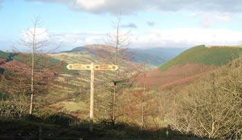 Panoramic view of valley with afforested hill slopes; wooden Tramroad signpost in foreground, with young birch trees